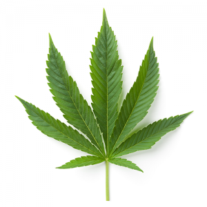 Cannabis Leaf Wholesale Market Icon