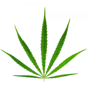 Hemp Leaf Wholesale Markets Icon
